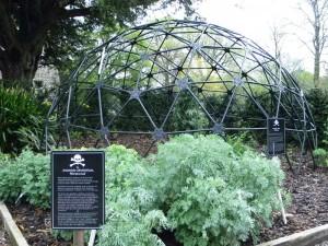 Artemisia absinthium, czyli po prostu... piołun